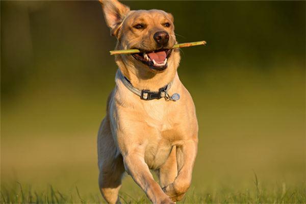 起名 名字大全 > 狗名大全搞笑  狗狗可爱的面庞以及有趣的行为,让人