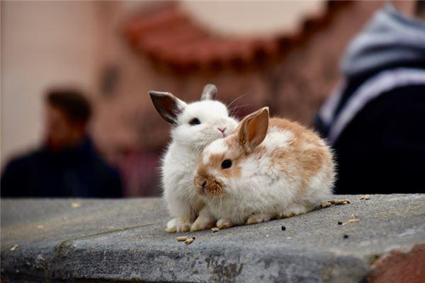 属兔遭受异地恋煎熬会怎么想